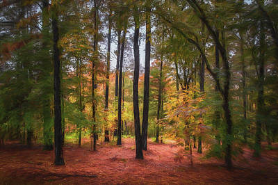 Photograph - The Lighted Woods by James Barber