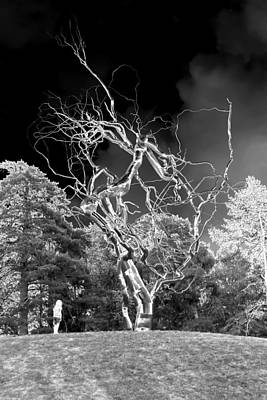 Design Turnpike Books - The lightning Tree by JDW Photography
