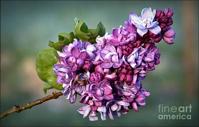 Photograph - The Lilac by Julia Hassett