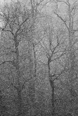 Photograph - The Lines Of Trees In A Whiteout by Belinda Greb