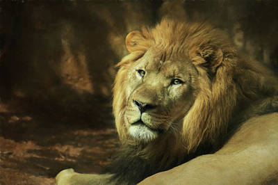 Photograph - The Lion by Lori Deiter