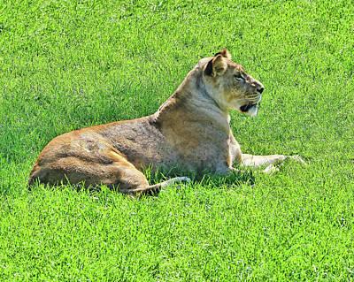 Photograph - The Lion Queen by Allen Beatty