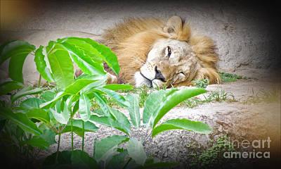 Photograph - The Lion Sleeps Tonight by Judy Kay