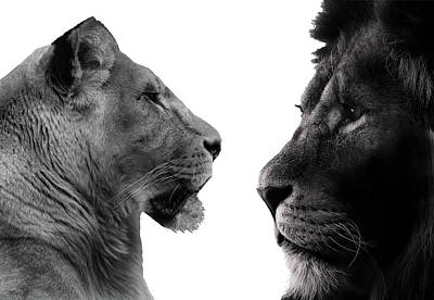 The Lioness And Lion Art Print by Martin Newman