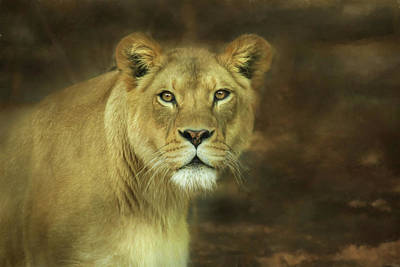 Photograph - The Lioness by Lori Deiter