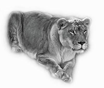 The Lioness - Vignette Bw Art Print by Steve Harrington