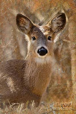 Photograph - The Little Doe by Laurinda Bowling