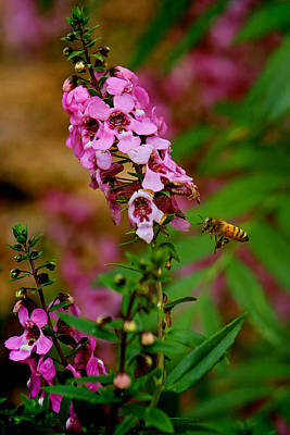 Photograph - The Little Pollinator by HH Photography of Florida
