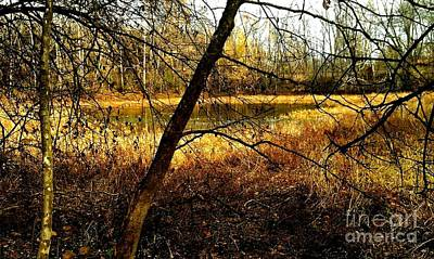 The Little Pond In The Woods Art Print by Scott D Van Osdol