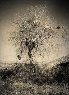 Photograph - The Little Tree by Sandra Selle Rodriguez