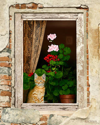 Geraniums Digital Art - The Little Tuscan Tiger by Bob Nolin