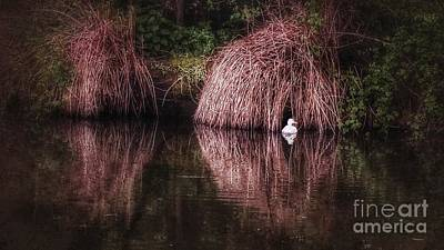 Photograph - The Little White Duck by Isabella F Abbie Shores