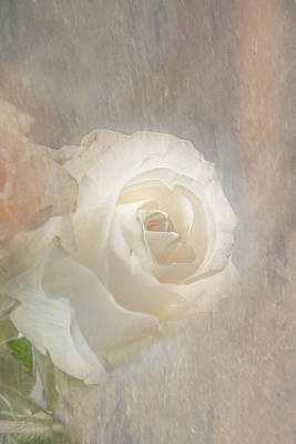 Photograph - The Living Rose by Pamela Williams