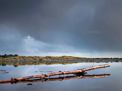 Photograph - The Log by Greg Nyquist