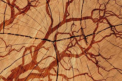 Photograph - The Log by Michael Mogensen