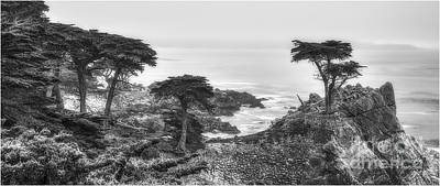 The Lone Cypress 2 Art Print by Serge Chriqui