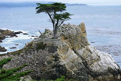 Photograph - The Lone Cypress by Marian Jenkins