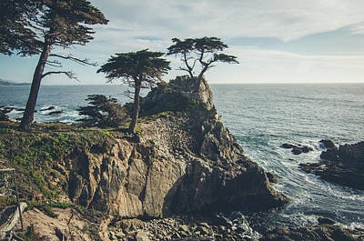 Photograph - The Lone Cypress No.2 by Margaret Pitcher