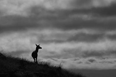 Photograph - The Lone Hind by Gavin MacRae
