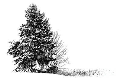 Photograph - The Lone Pine by Jim Rossol