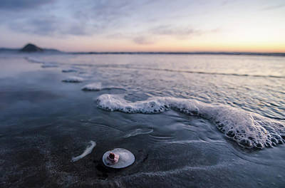 Photograph - The Lone Sand Dollar by Margaret Pitcher