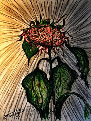 Sunflowers Drawings - The Lone Sunflower 4 by Jose A Gonzalez Jr