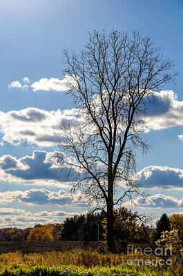 Photograph - The Lone Tree by Grace Grogan