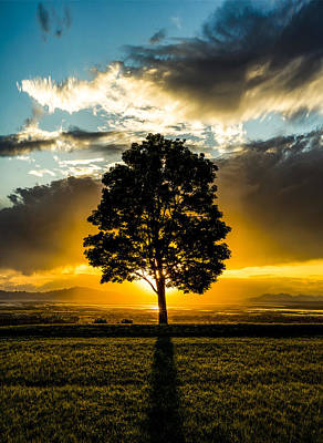 The Lone Tree Art Print by Peter Irwindale