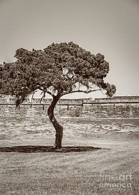 Photograph - The Lone Tree by Todd Blanchard