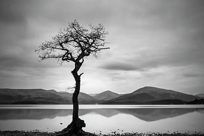Photograph - The Lone Tree by Veli Bariskan