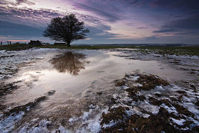 Photograph - The Lone Tree by Will Gudgeon