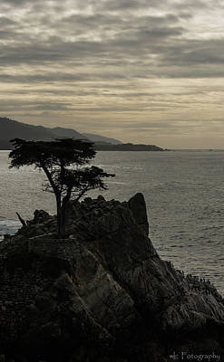 Photograph - The Lonely Cypress 2 by Wendy Carrington