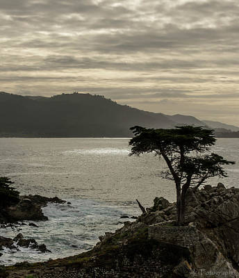 Photograph - The Lonely Cypress 3 by Wendy Carrington