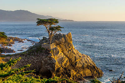 Photograph - The Lonely Cypress by Derek Dean