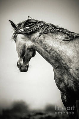 Photograph - The Lonely Horse by Dimitar Hristov