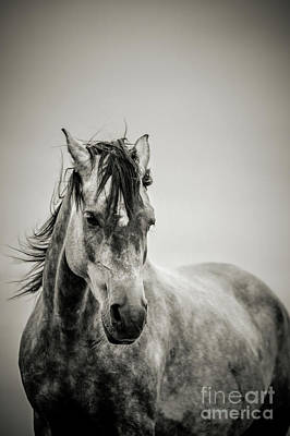 Photograph - The Lonely Horse Portrait In Black And White by Dimitar Hristov