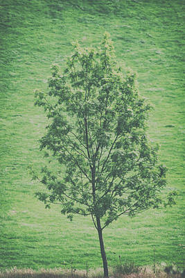 Abstract Landscape Photos - The Lonely Tree by Martin Newman