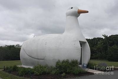 Photograph - The Long Island Iconic Big Duck by John Telfer