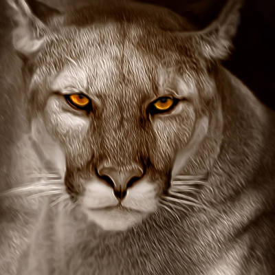 The Look - Florida Panther Art Print by Mitch Spence