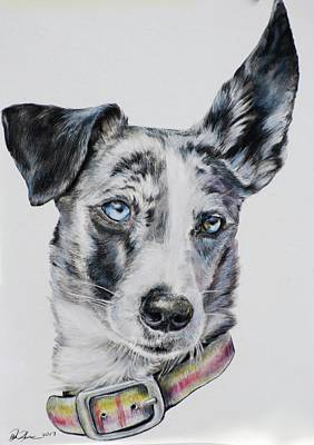 Cattle Dog Drawing - The Look Of Love  by Danielle Rosalie Pellicci
