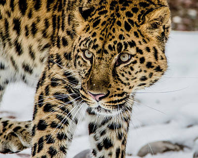 Photograph - The Look by Teresa Wilson