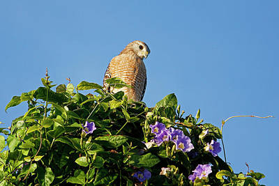 Photograph - The Lookout by HH Photography of Florida