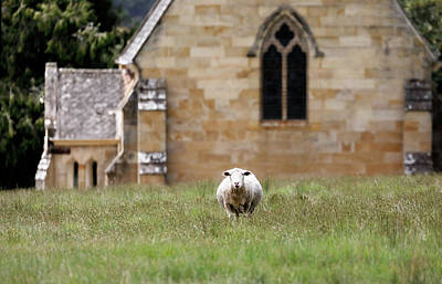 Photograph - The Lord Is My Shepherd by Nicholas Blackwell