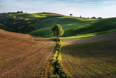 Photograph - The Lost Love Tree by Matteo Viviani