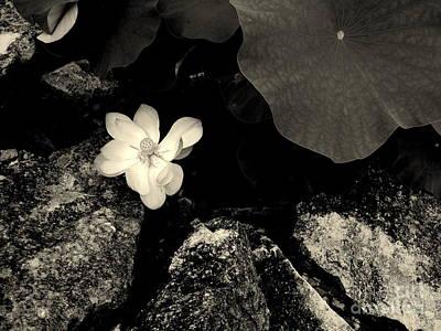 Photograph - The Lotus 2 by Nancy Kane Chapman