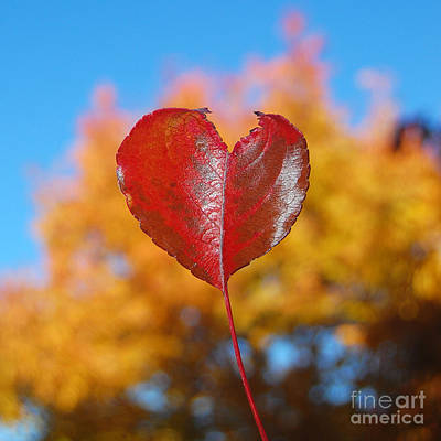 Photograph - The Love Of Fall by Debra Thompson