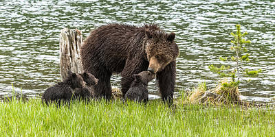 The Love Of Mama Bear Art Print