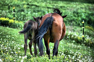 Horse Photograph - The Love Of Mom by Emily Stauring