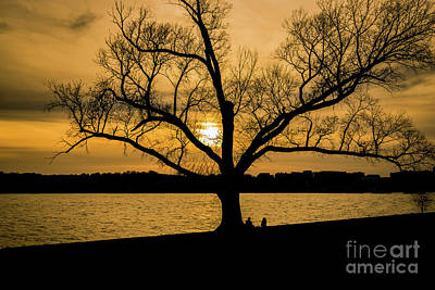 Locust Sunset Photograph - The Love Tree by Mao Lopez