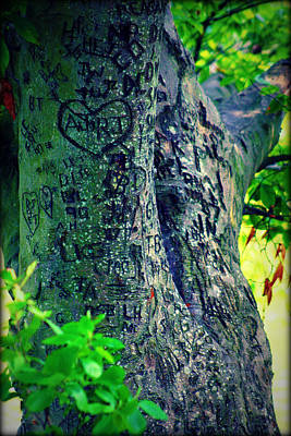 Photograph - The Love Tree by Susie Weaver